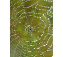 Spider Tears Photographic Print