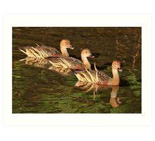 Three Little Ducks All in a Row Art Print