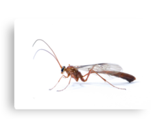 Parasitic Wasp Canvas Print