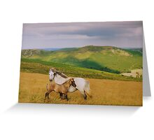 Dartmoor: Ponies on Hameldown Greeting Card