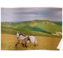 Dartmoor: Ponies on Hameldown Poster