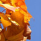 Colourful Fall by TriciaDanby