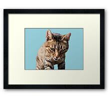 Tabby Back Looking Down Background Removed Framed Print