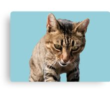 Tabby Back Looking Down Background Removed Canvas Print