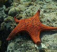 Life on South Australia's Rocky Reefs by Dan & Emma Monceaux