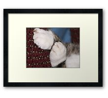 Sweet Little Paws Framed Print