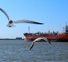 The Birds at Galveston by LarryB007