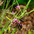 Moth by Lisa DeLong