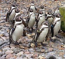 Humboldt Penguin Party by loubylou2209