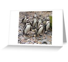 Humboldt Penguin Party Greeting Card