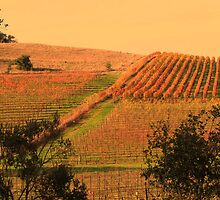 Autumn In The Vineyard by Linda Miller Gesualdo