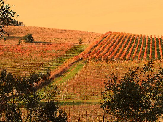 Autumn In The Vineyard by Linda Miller Gesualdo