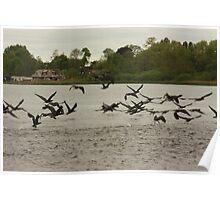 birds Poster