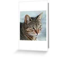 Stunning Tabby Cat Close Up Portrait Greeting Card