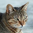 Stunning Tabby Cat Close Up Portrait by taiche