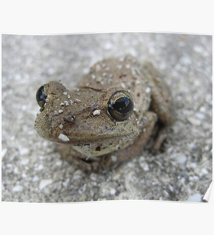 Brown Tree Frog Poster