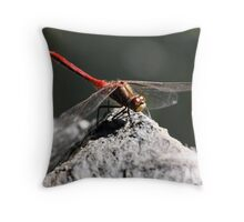 Striped Meadowhawk on Rock Throw Pillow