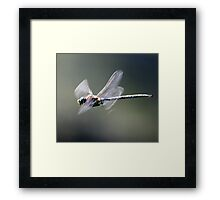 Paddle-Tailed Darner In-Flight Profile Framed Print