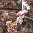 Ice Storm Pine Cones by Jimmy Haslam