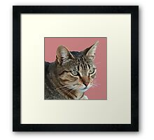 Stunning Tabby Cat Close Up Portrait Vector Isolated Framed Print