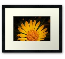 Mexican Sunflower at Tohono Chul Park Framed Print
