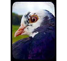 Pigeon TTV Photographic Print