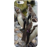 Humboldt Penguin Peeking iPhone Case/Skin