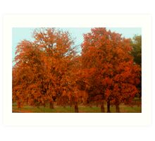 Maples Colored By Nature Art Print