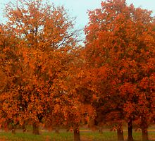 Maples Colored By Nature by Linda Miller Gesualdo