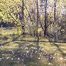 Dandelion Field by Kendra Kantor