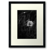 Dramatic High Contrast Black and White Dandelion and Seeds Spotlit by Sunlight Framed Print