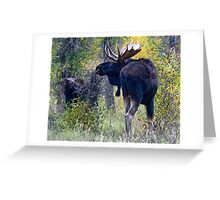 Moose Bull & Calf, Fall Colors Greeting Card