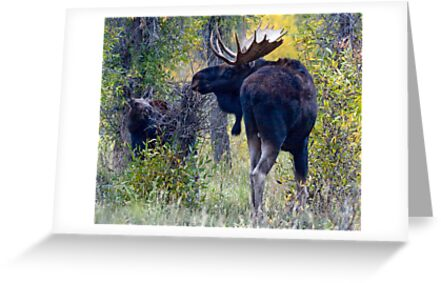 Moose Bull & Calf, Fall Colors by A.M. Ruttle