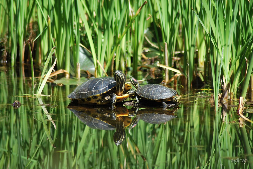 Mirrored turtles by evilcat