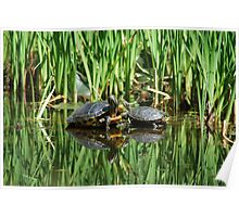 Mirrored turtles Poster