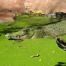 Green Island Croc by Vanessa Barklay