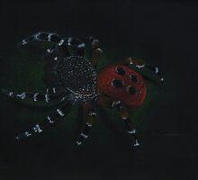 Eresus cinnaberinus- red spider by antiquos87