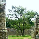 Titchfield Abbey again. by Sammyss3