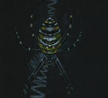 Argiope bruennichi- tiger spider by antiquos87
