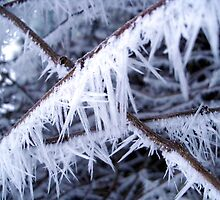 -7c and Dropping by trish725