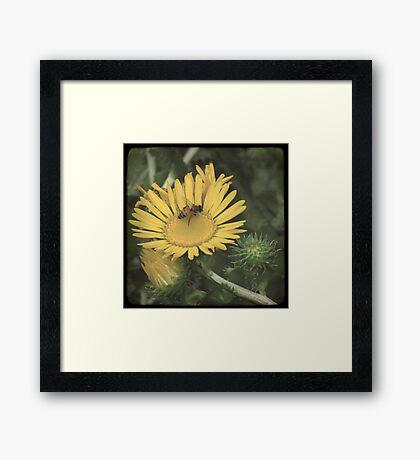 Wildflower TTV Framed Print
