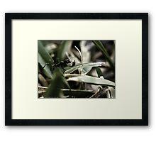 Foraging Ant Framed Print
