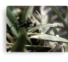 Foraging Ant Metal Print