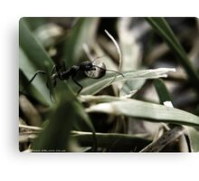 Foraging Ant Canvas Print