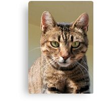 Portrait Of A Cute Tabby Cat With Direct Eye Contact Canvas Print