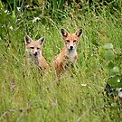 The Red Fox Kits by Vickie Emms