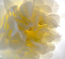 'Spring Ballet Series - Camellia Tutu 2 ' by Madonna McKenna