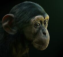 Baby Chimpanzee by JulieM