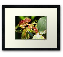 Raw Red Theory Framed Print