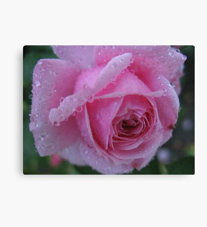 Hot and Bothered Rose Canvas Print